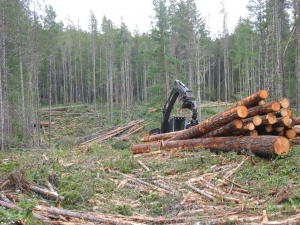 harvesting on private managed forest land